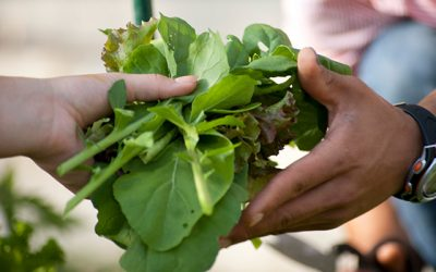 Minimizing Food Waste and Maximizing Sustainability at Pearson