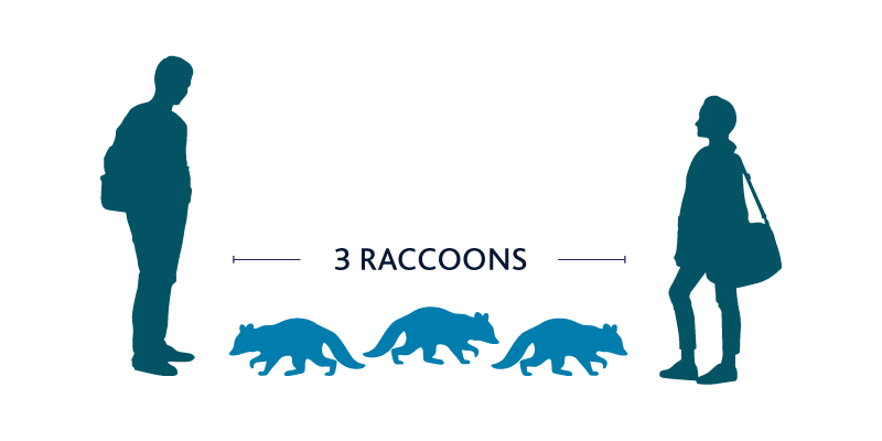 Please Stand 3 Raccoons Apart