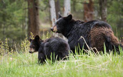Springtime Bear Aware